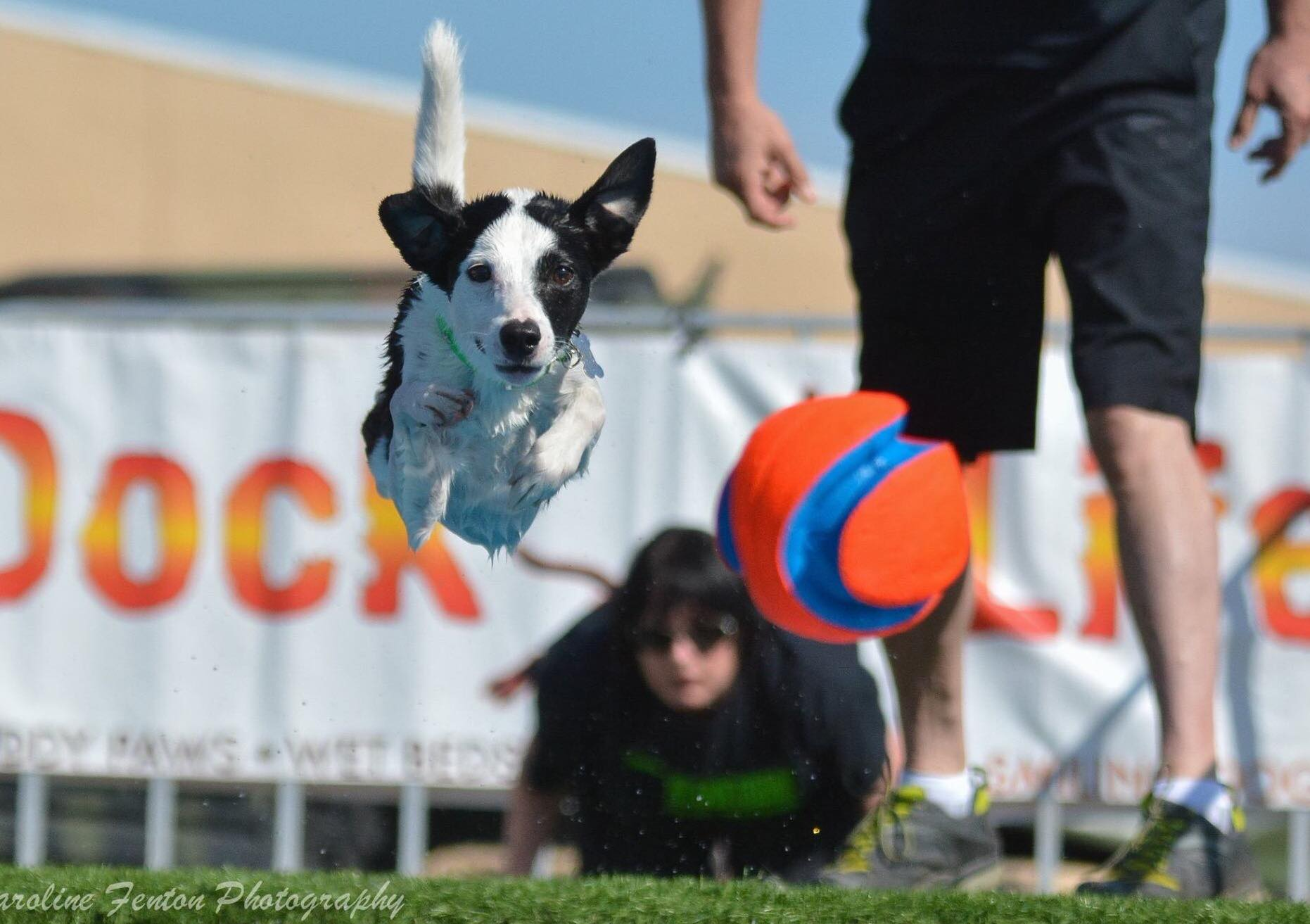 ultimate air dog photo